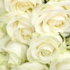 Букет из белых 17 роз «Единственной»