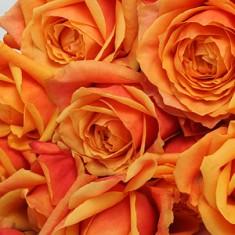 Букет из 15 роз «Милана»