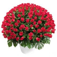 Большая корзина красных роз «Гранатовый браслет»