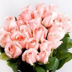 Розовая роза «Ангажемент»