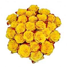 Роза желто-красная «Хай меджик»