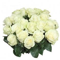 Роза белая «Мондиал»