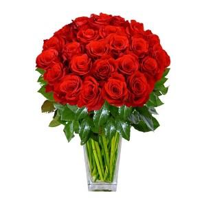 Роза красная Эквадор