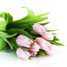 9 розовых тюльпанов «Тюльпан»