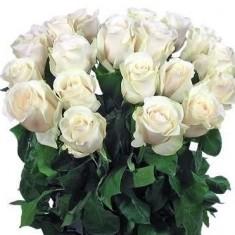 Роза белая Эквадор
